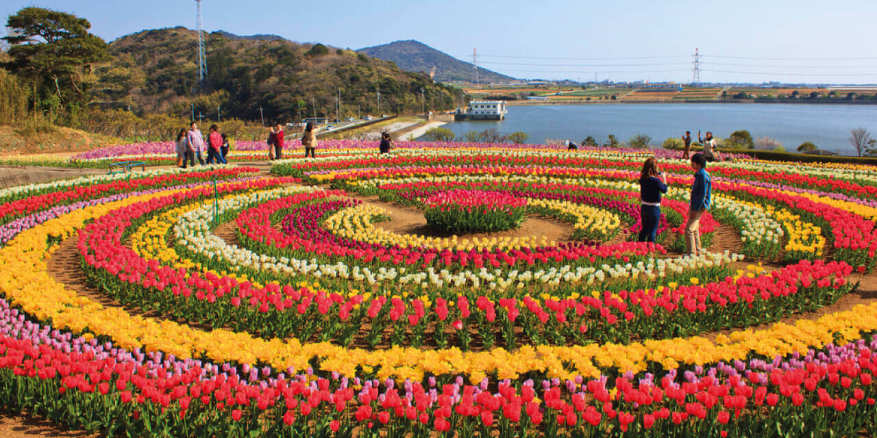 8-beautiful Tulip garden