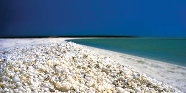 Shell Beach, Shark Bay, Australia | Ultimate Beach Destinations Kesari tours