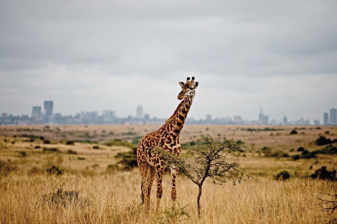 3.Nairobi National Park
