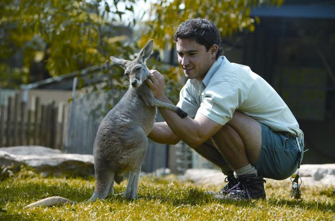 4.kangaroo petting
