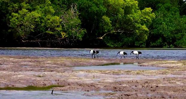 Mida Creek Lagoon