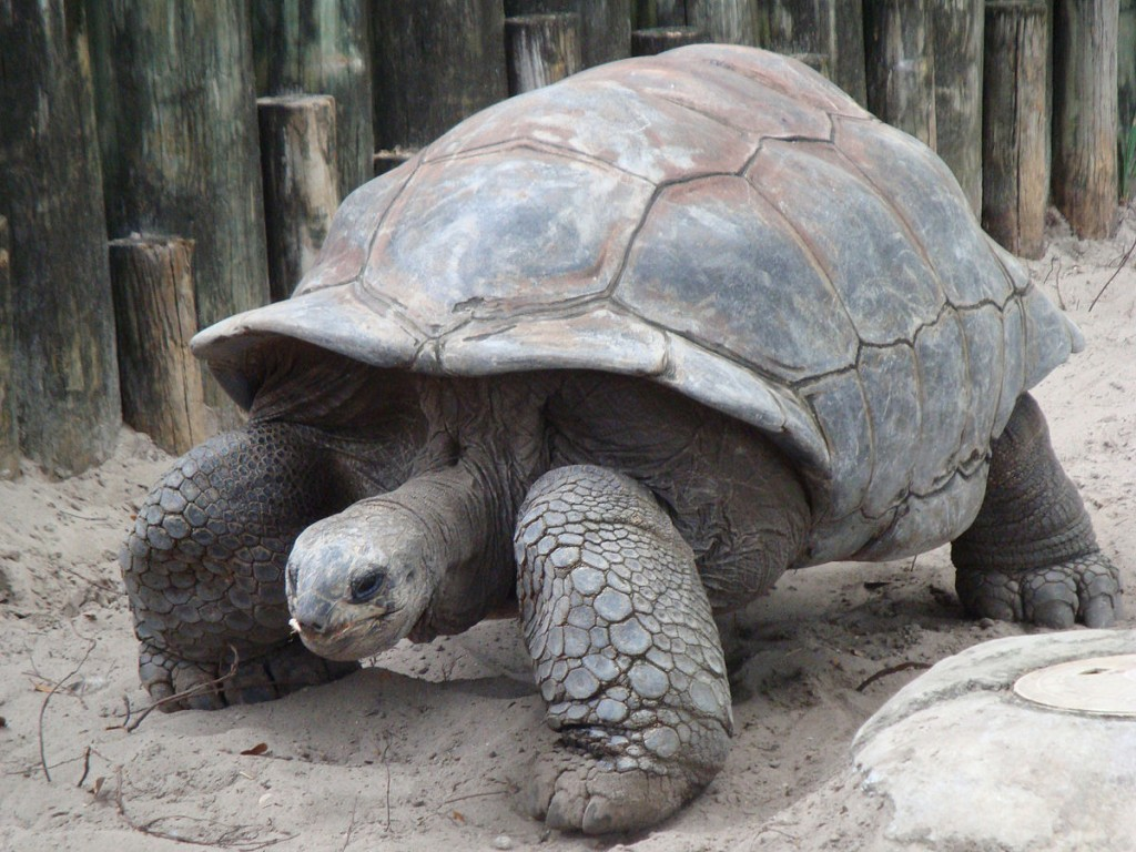 Kesari Tours Aldabra