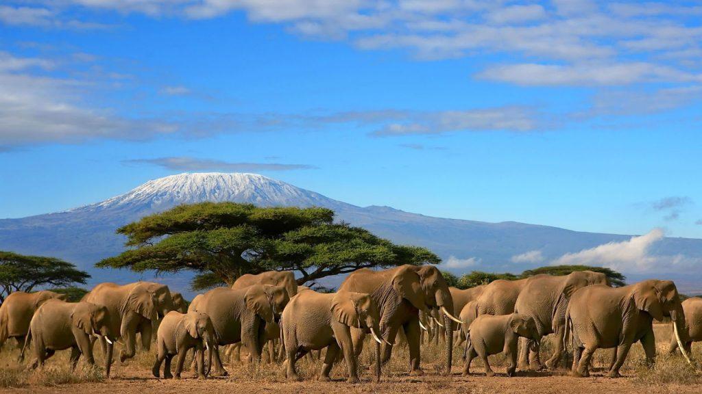 Mt-Kilimanjaro-Africa-Kesari Tours