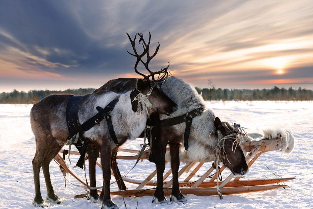 Kesari-Tours-Reindeers-Sledding