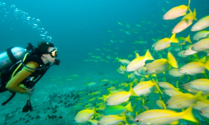 Kesari-Tours-Scuba Diving