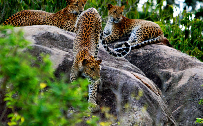 Kesari Tours Wilpattu National Park