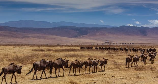Ngorongoro NP
