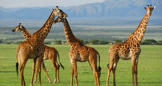 SerengetiNp