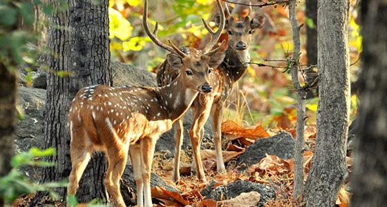 2. pench, deer, kesari tours