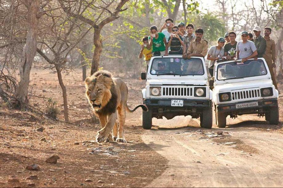 2. safari, kesari tours