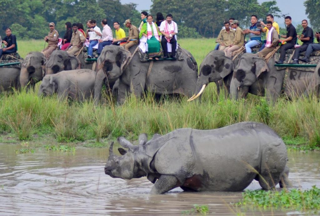 kaziranga national park elephant safari - Kesari Tours