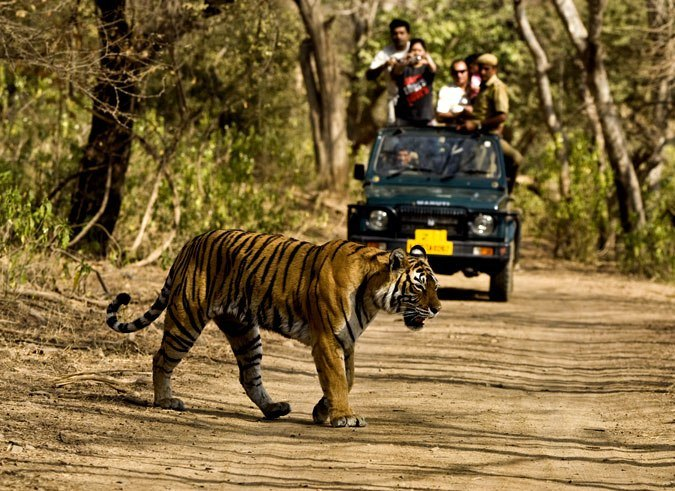 kaziranga national park jeep safari-Kesari Tours