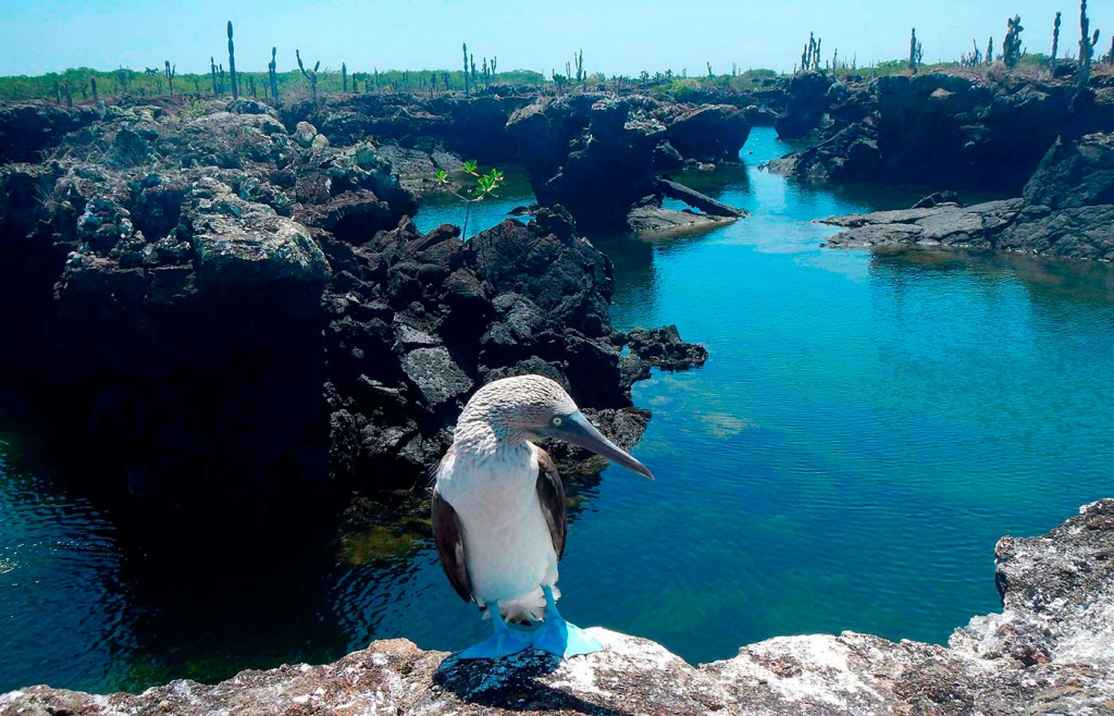 Galapagos Islands hiking - wildlife - Kesari Tours