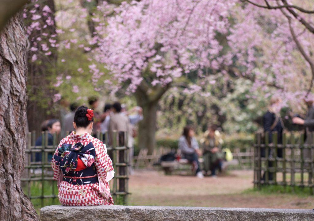 Japan Cheery Blossom Kyoto