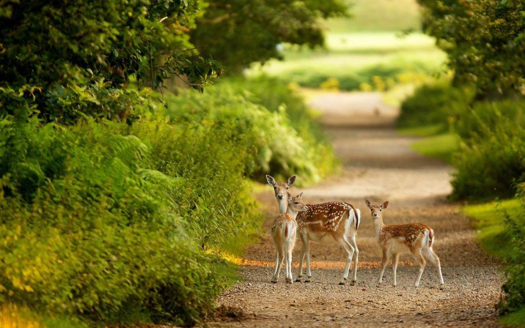 Periyar National Park, wildlife, kerala
