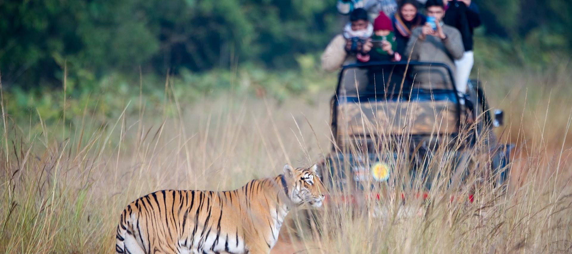 Tadoba jungle safari, Tadoba national park packages, Best Time to Visit Tadoba