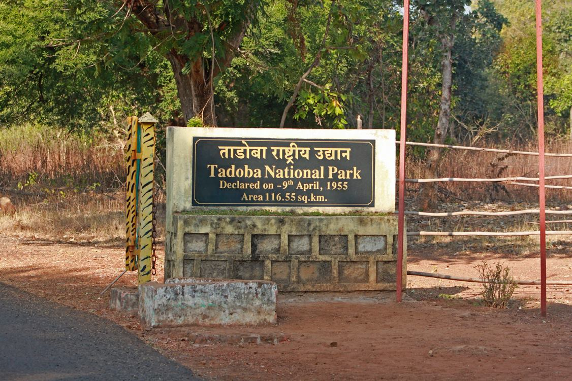 Tadoba Andhari national park, Tadoba National Park, Tadoba tiger reserve, Tadoba jungle safari, Tadoba national park packages, Best Time to Visit Tadoba