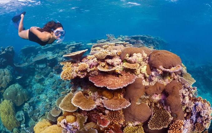 Snorkeling and diving Kesari Tours   things not to miss when in australia