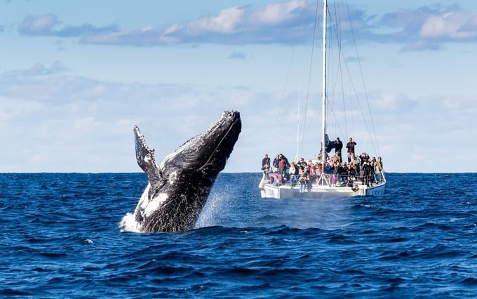 Whale watching in Brisbane kesari tours | things not to miss when in australia