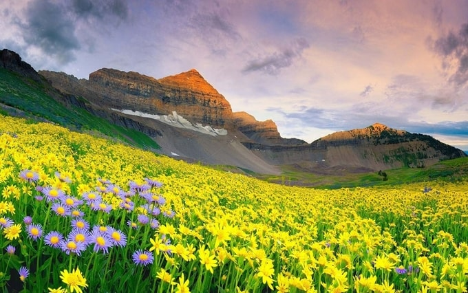 Valley of flowers in Uttarakhand kesri tours| best places to visit in monsoon